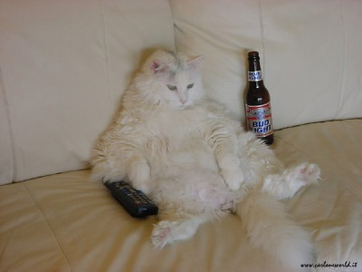 Lazy-cat5